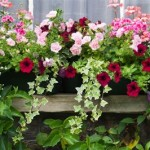 Best Container Plants For Sunny Patio