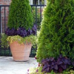 Evergreen Patio Container Plants